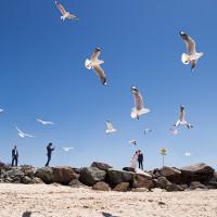 Noosa Heads Birds